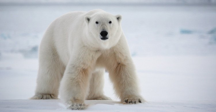 Retreat Planning 201: Bring The Polar Bear